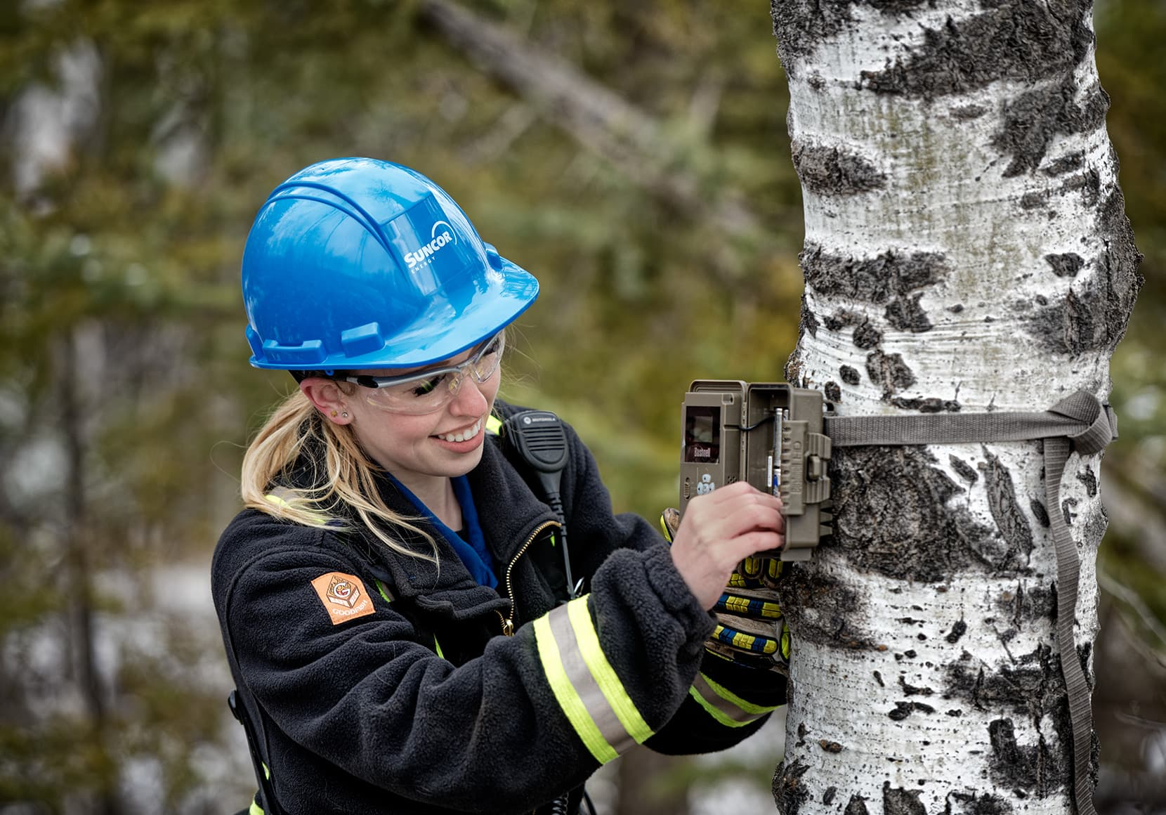 A female worker, Jillian Janes, installing a wildlife monitoring camera on a tree at the MacKay River site. She is wearing a blue hard hat, eye protection and coveralls.