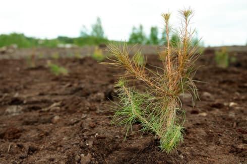 Fertilisation et surveillance de la nouvelle végétation