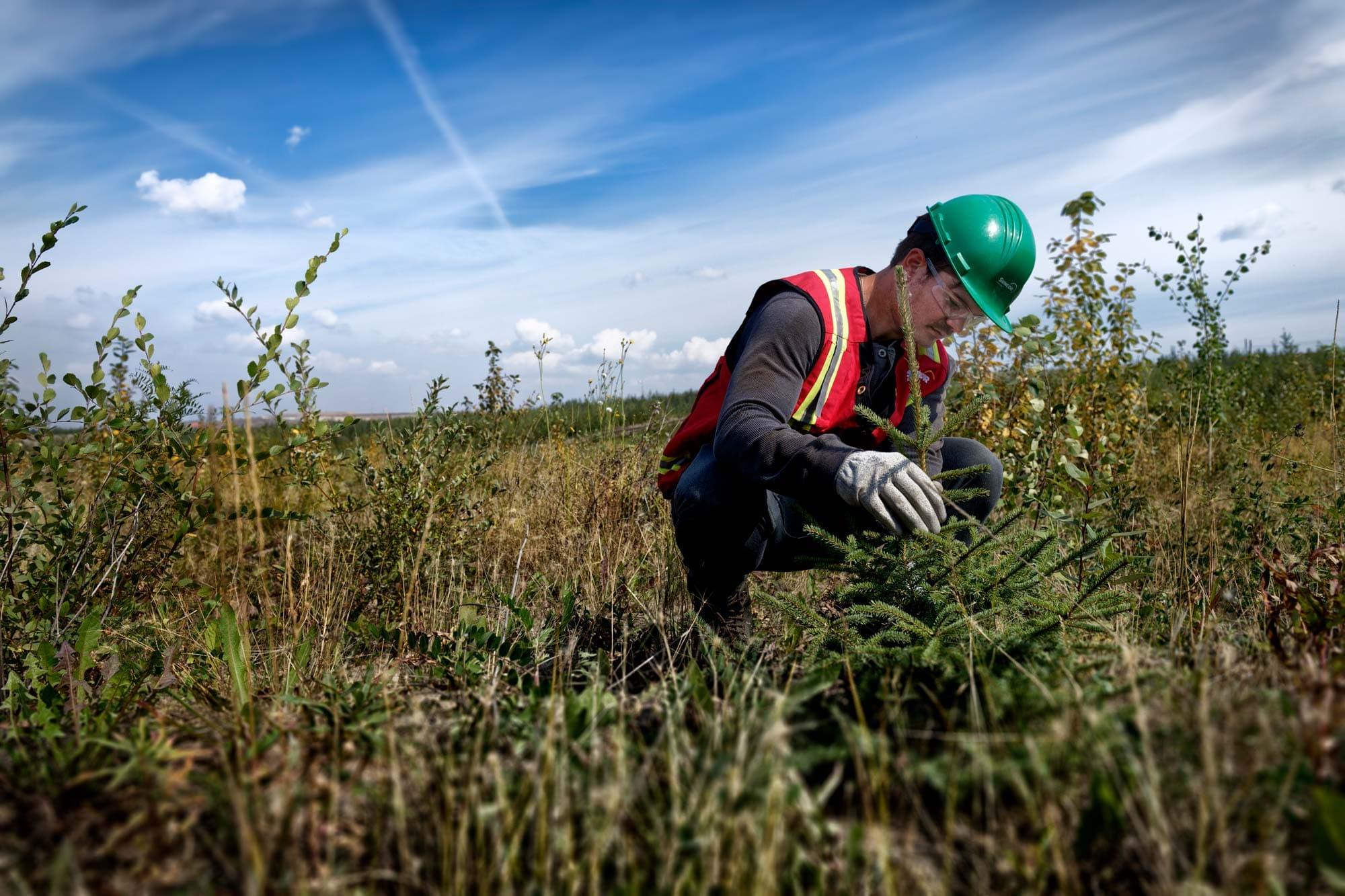 Des étudiants chercheurs mesurant des arbres à Nikanotee Fen