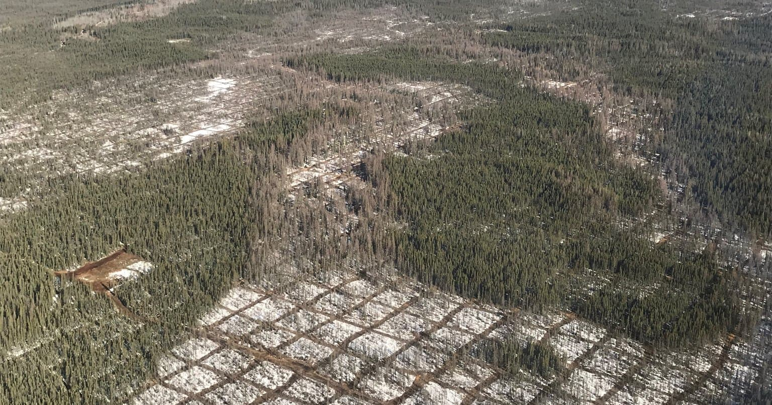 Aerial photo of freshly cut lines to conduct seismic exploration in northern Alberta.