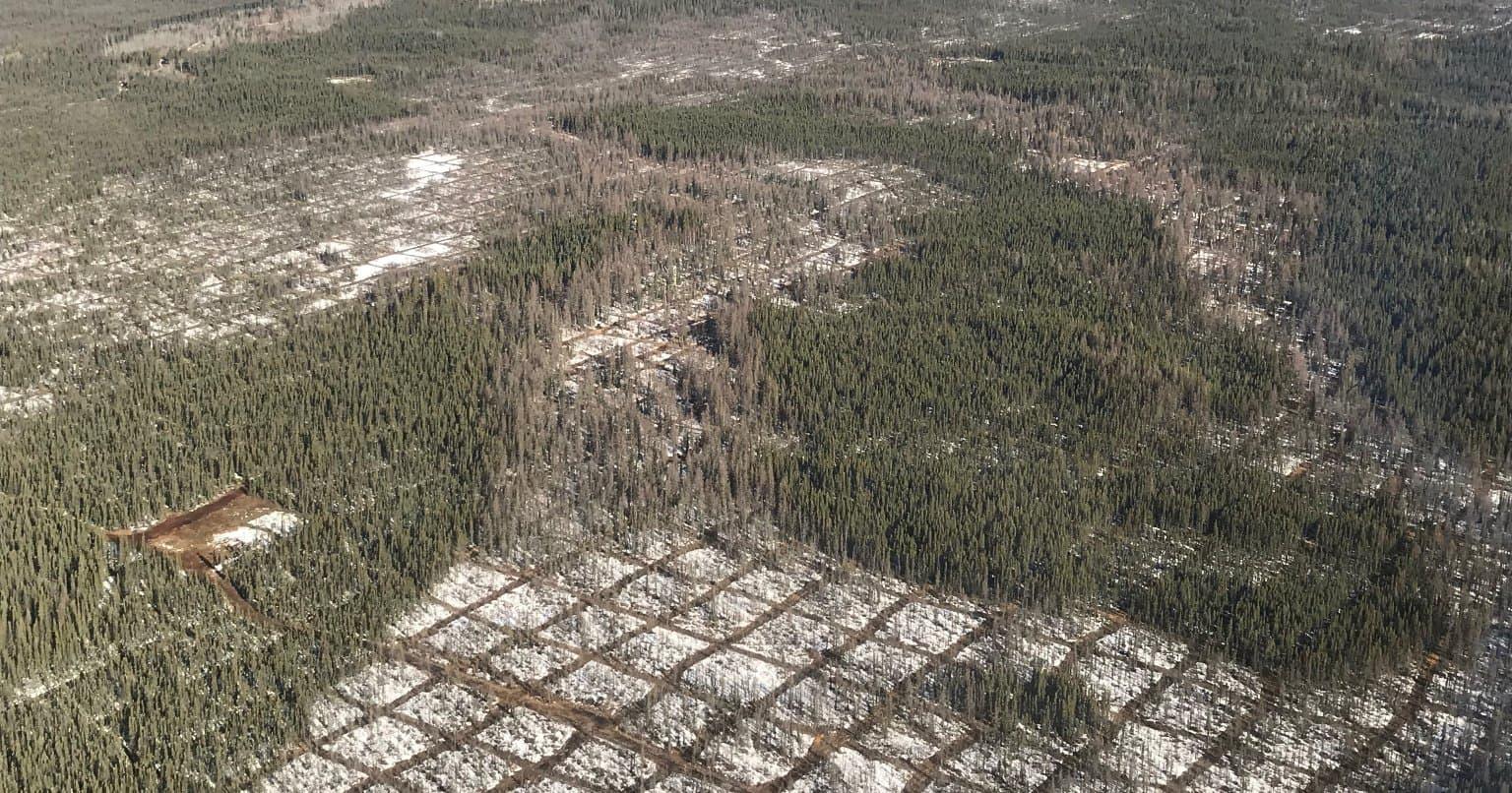 Photo aérienne de lignes fraîchement coupées pour effectuer une exploration sismique dans le nord de l'Alberta.